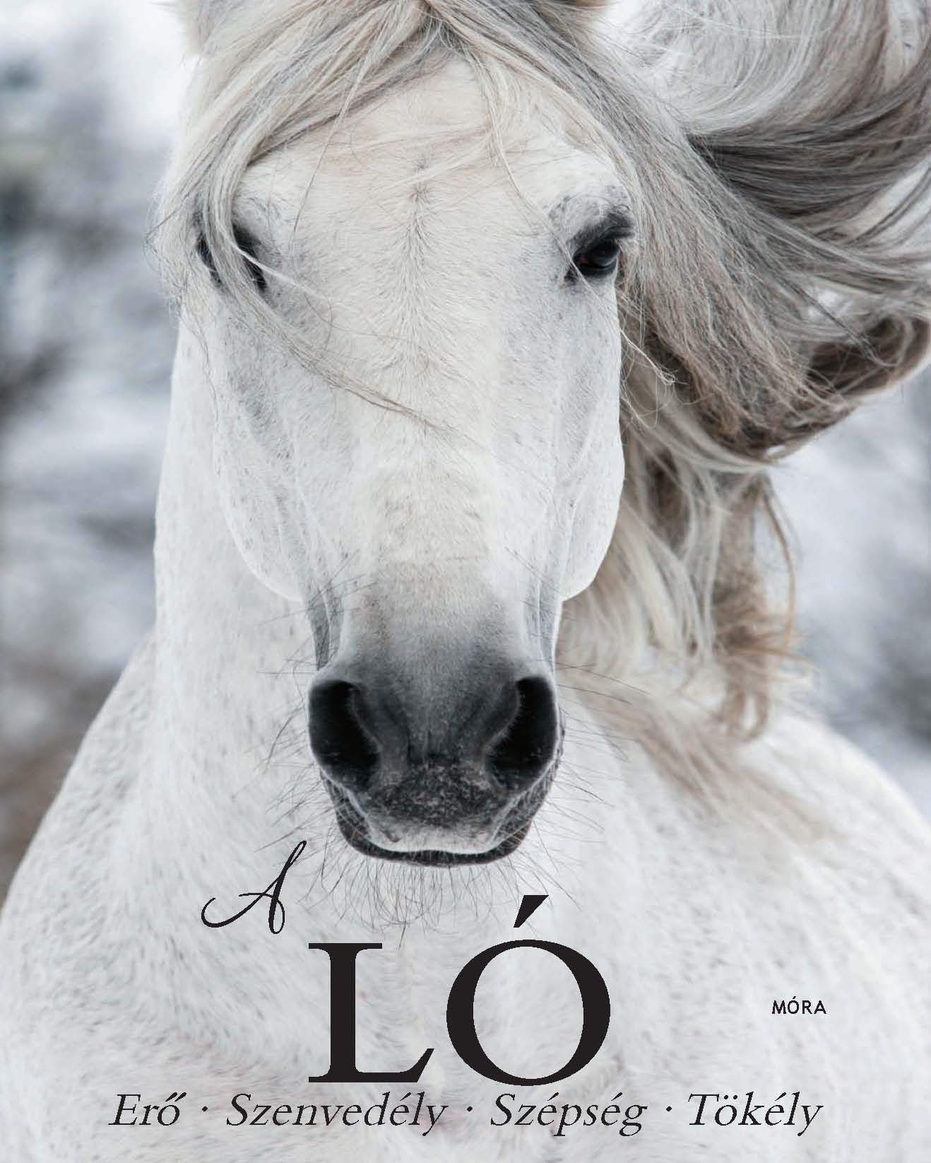 A Ló - Erő, szenvedély, szépség, tökély