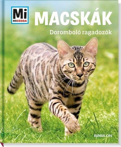 Macskák- doromboló ragadozók