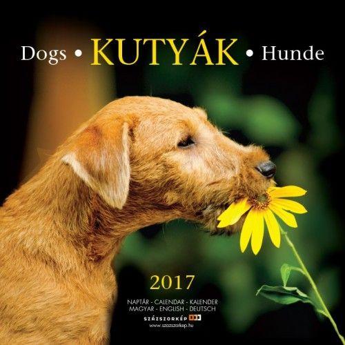 Kutyák - 2017 - falinaptár