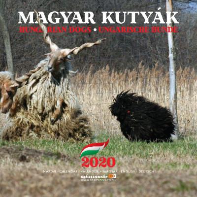 Magyar kutyák naptár 22x22 cm - 2020