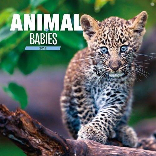 Animal Babies 2018 - Naptár